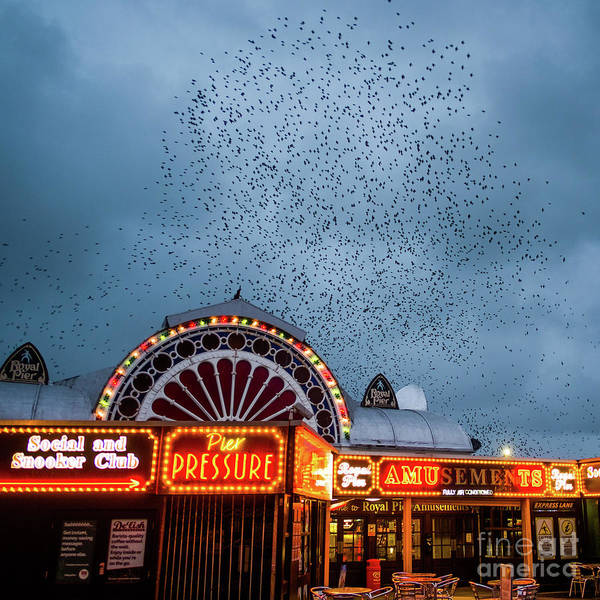 Starlings Over The Neon Lights Of Aberystwyth Pier Art Print