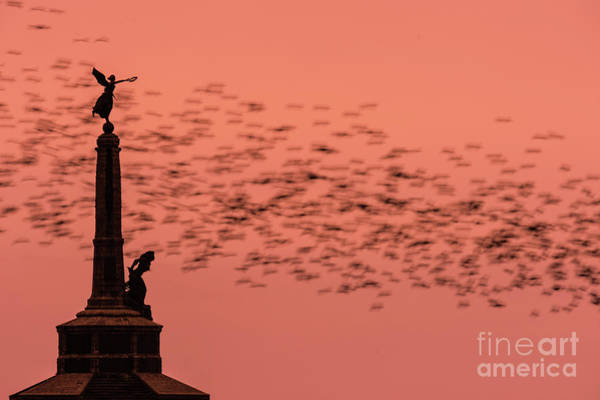 Starlings Sweeping Past Aberystwyth War Memorial Art Print