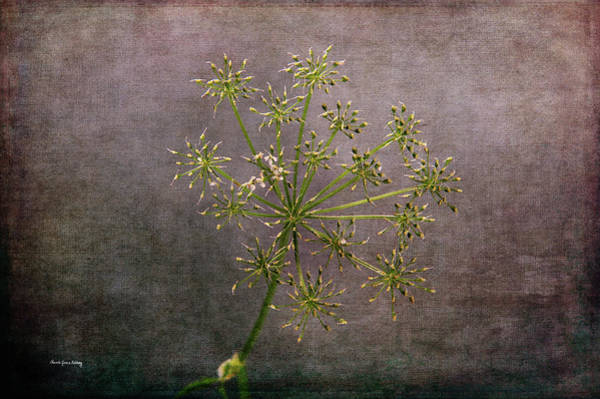 Photograph - Starry Flower by Randi Grace Nilsberg
