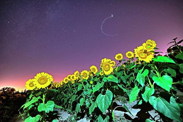 Photograph - Starry Sky Over Colby Farm Sunflowers Newbury Ma by Toby McGuire