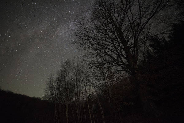 Photograph - Starry Trees Woodstock Vt by Toby McGuire