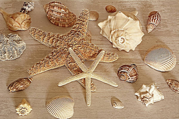 Photograph - Stars And Shells by Angie Tirado