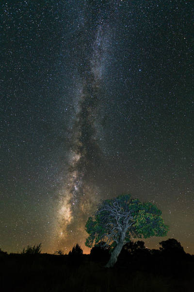 Photograph - Stars Over Pinyon by Michael Blanchette