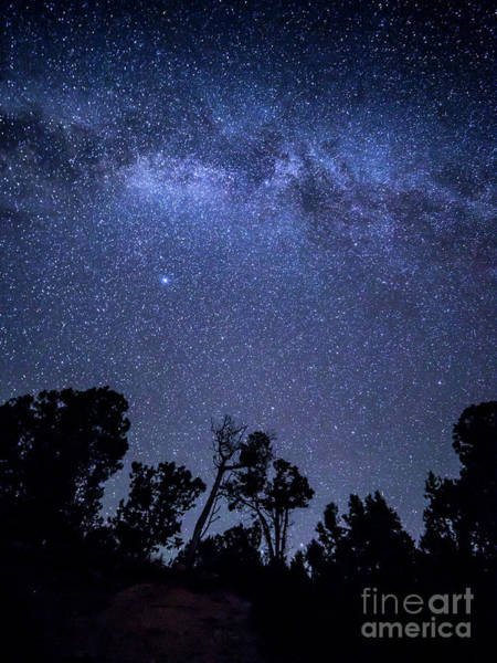 Verde Photograph - Stars Over Trees At Mesa Verde by Twenty Two North Photography