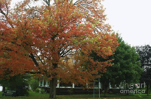 Photograph - Start Of Autumn by Deborah Benoit
