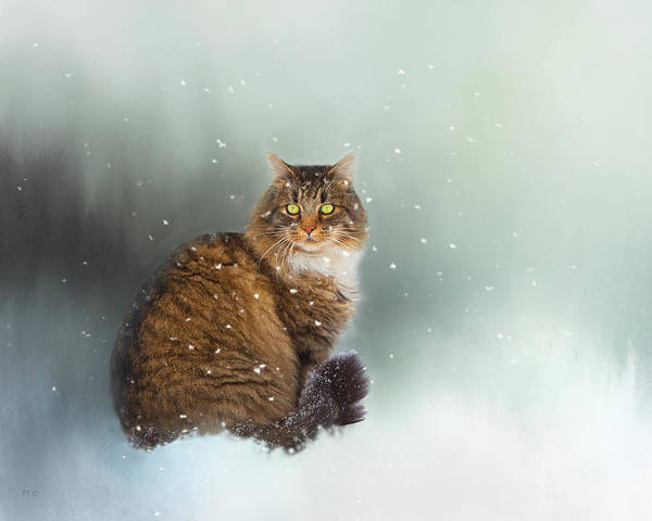 Long Hair Cat Photograph - Starting To Snow Again by Theresa Tahara