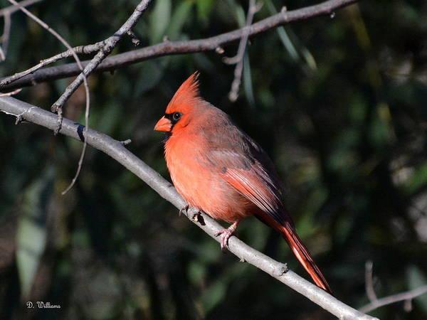 Photograph - State Bird by Dan Williams