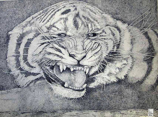 White Tiger Drawing - Stay Away by Lucien Van Oosten