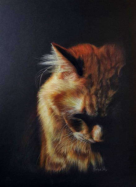 Orange Tabby Drawing - Stay Strong by Kelly Strope