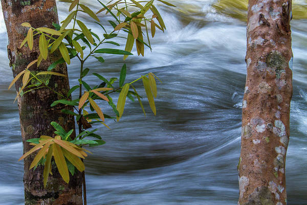 Photograph - Steady And Flowing by Hitendra SINKAR