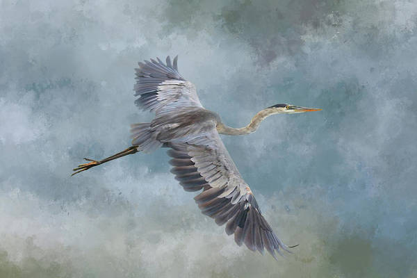 Great Blue Herons Photograph - Stealth Flyer by Donna Kennedy