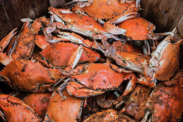 Wall Art - Photograph - Steamed Crabs by Brian Wallace