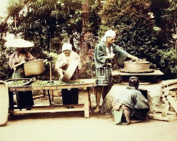 Photograph - Steaming Tealeaves by John Feiser