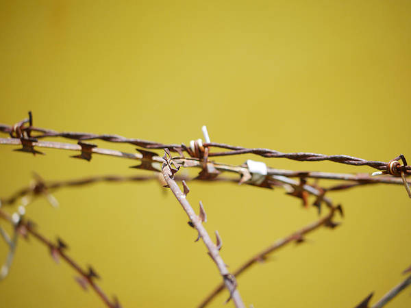 Photograph - Steel Thorns by Richard Reeve