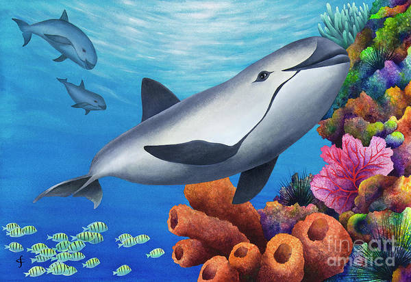 Wall Art - Digital Art - Vaquita Porpoise by MGL Meiklejohn Graphics Licensing