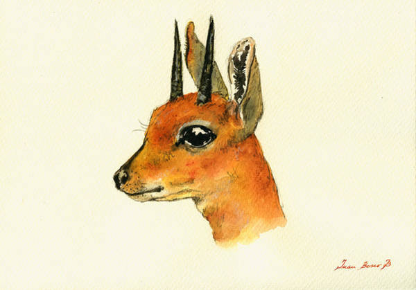 Antelope Wall Art - Painting - Steenbok by Juan  Bosco