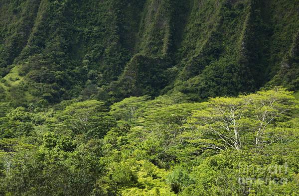 Photograph - Steep Cliffs Of Ko'olau Mountains by Charmian Vistaunet