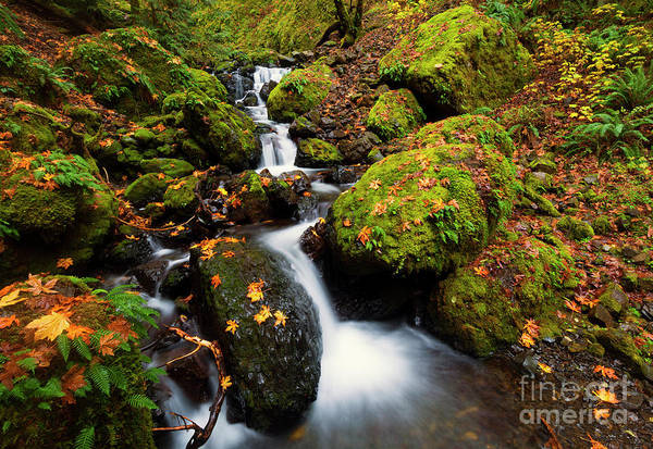Wall Art - Photograph - Steps Of Autumn by Mike Dawson