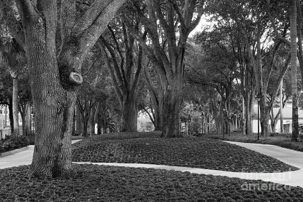 Photograph - Stetson University Stetson Green by University Icons