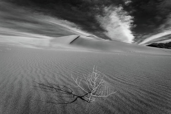 Death Valley Photograph - Stick II by Peter Tellone