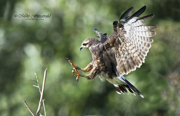 Photograph - Sticking The Landing by Mike Fitzgerald