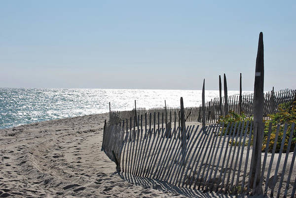Photograph - Sticks In The Sand by Lori Tambakis