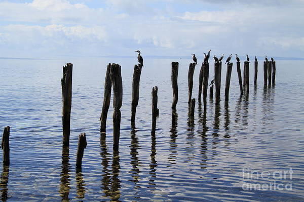 Photograph - Sticks Out To Sea by Stephen Mitchell