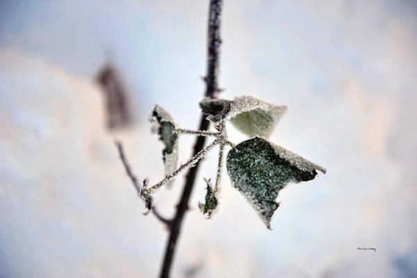 Photograph - Still Green by Randi Grace Nilsberg