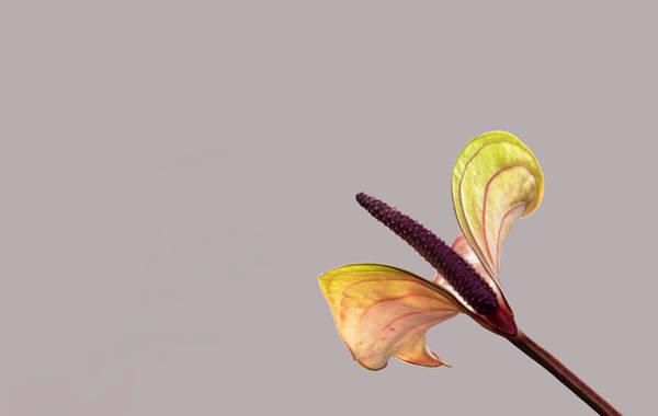 Photograph - Still Life 03 by Jim Dollar