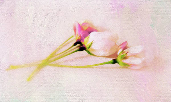 Photograph - Still Life Blossoms by Jessica Jenney
