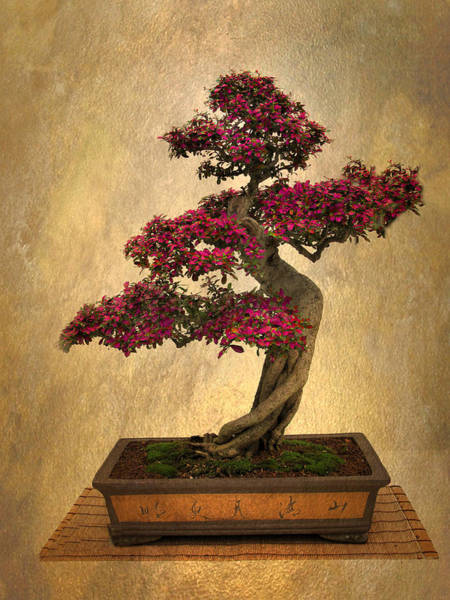 Digital Art - Still Life Bonsai by Jessica Jenney
