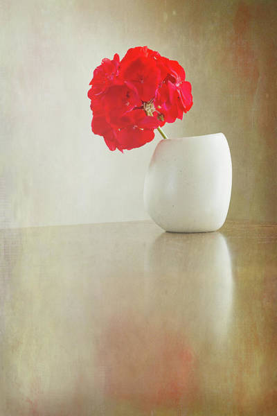 Photograph - Still Life Geranium by Sue Collura