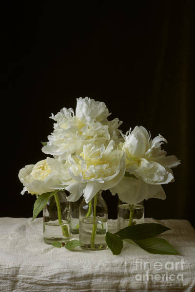 Wall Art - Photograph - Still Life Of Peony Flowers On Table by Edward Fielding