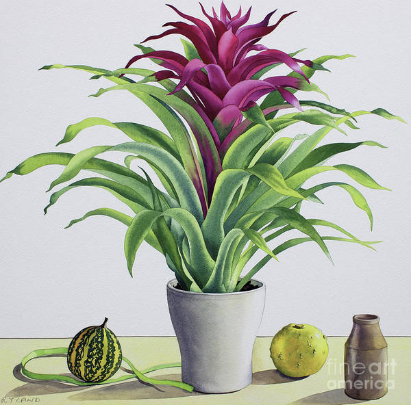 Wall Art - Painting - Still Life With Bromeliad by Christopher Ryland