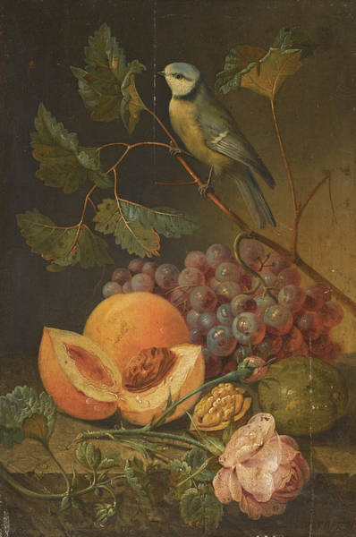 Wall Art - Painting - Still Life With Grapes And Peaches And A Blue Tit by Johann Nepomuk Mayrhofer