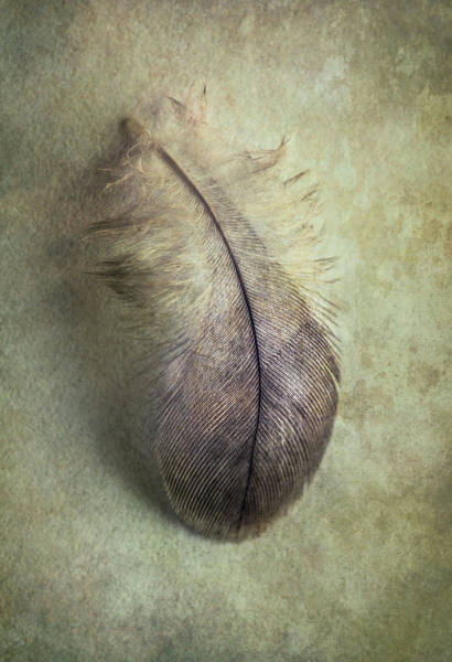 Wall Art - Photograph - Still Life With Gray Feather by Jaroslaw Blaminsky