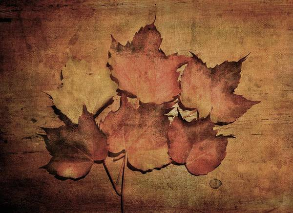 Photograph - Still Life With Leaves by Vittorio Chiampan