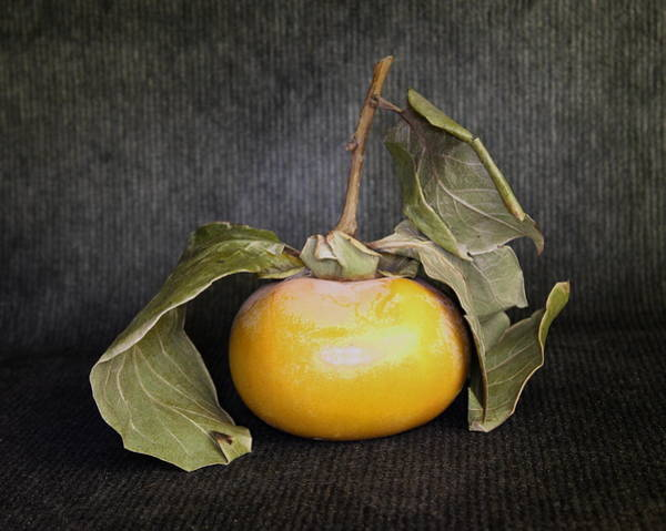 Still Life With Persimmon Art Print