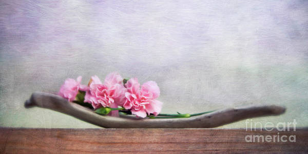 Carnation Photograph - Still Life With Pink Carnations And Driftwood by Priska Wettstein