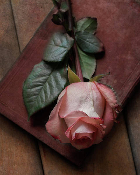 Wall Art - Photograph - Still Life With Pink Rose And Old Red Book by Jaroslaw Blaminsky
