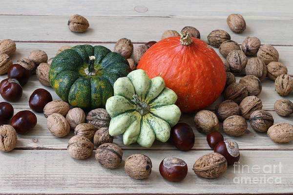 Cucurbits Photograph - Still Life With Products Of Autumn by Michal Boubin
