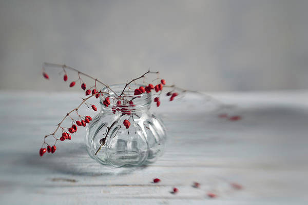 Wall Art - Photograph - Still Life With Red Berries by Nailia Schwarz