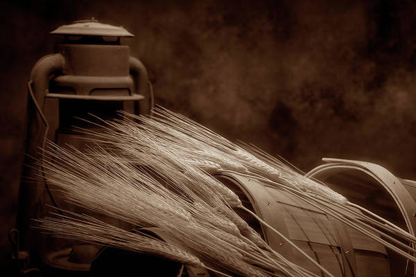 Reap Photograph - Still Life With Wheat I by Tom Mc Nemar