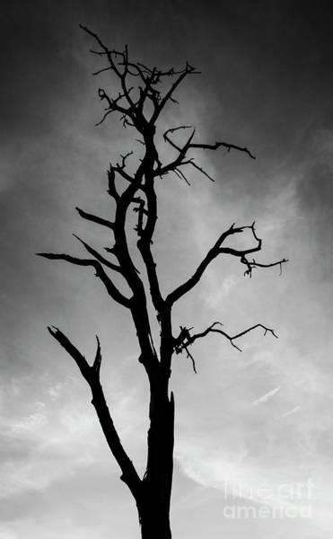 Photograph - Still Standing by Scott Kemper