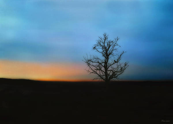 Photograph - Stillness by Anna Louise