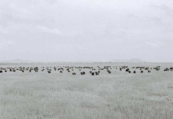Photograph - Stillness Of The Serengeti by Shaun Higson