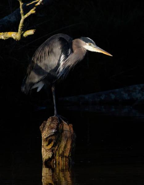 Photograph - Stillness On The Hunt by Sheldon Bilsker