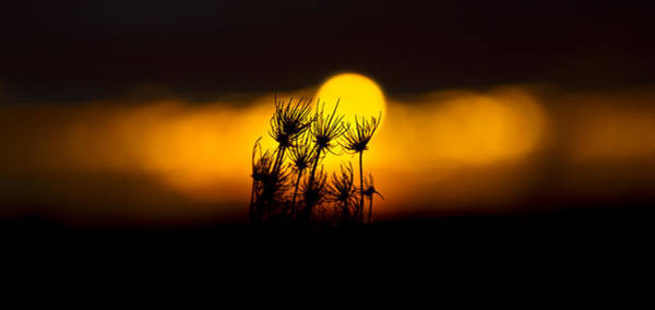 Photograph - Stolen Sunrise by Phil Koch