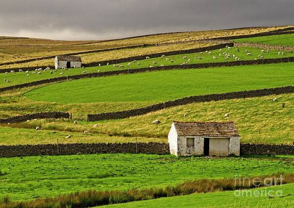 Photograph - Stone Barns In The Teesdale Landscape by Martyn Arnold