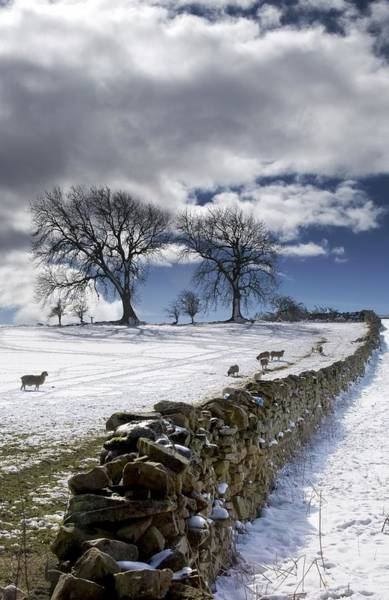Boundary County Photograph - Stone Fence, Weardale, County Durham by John Short